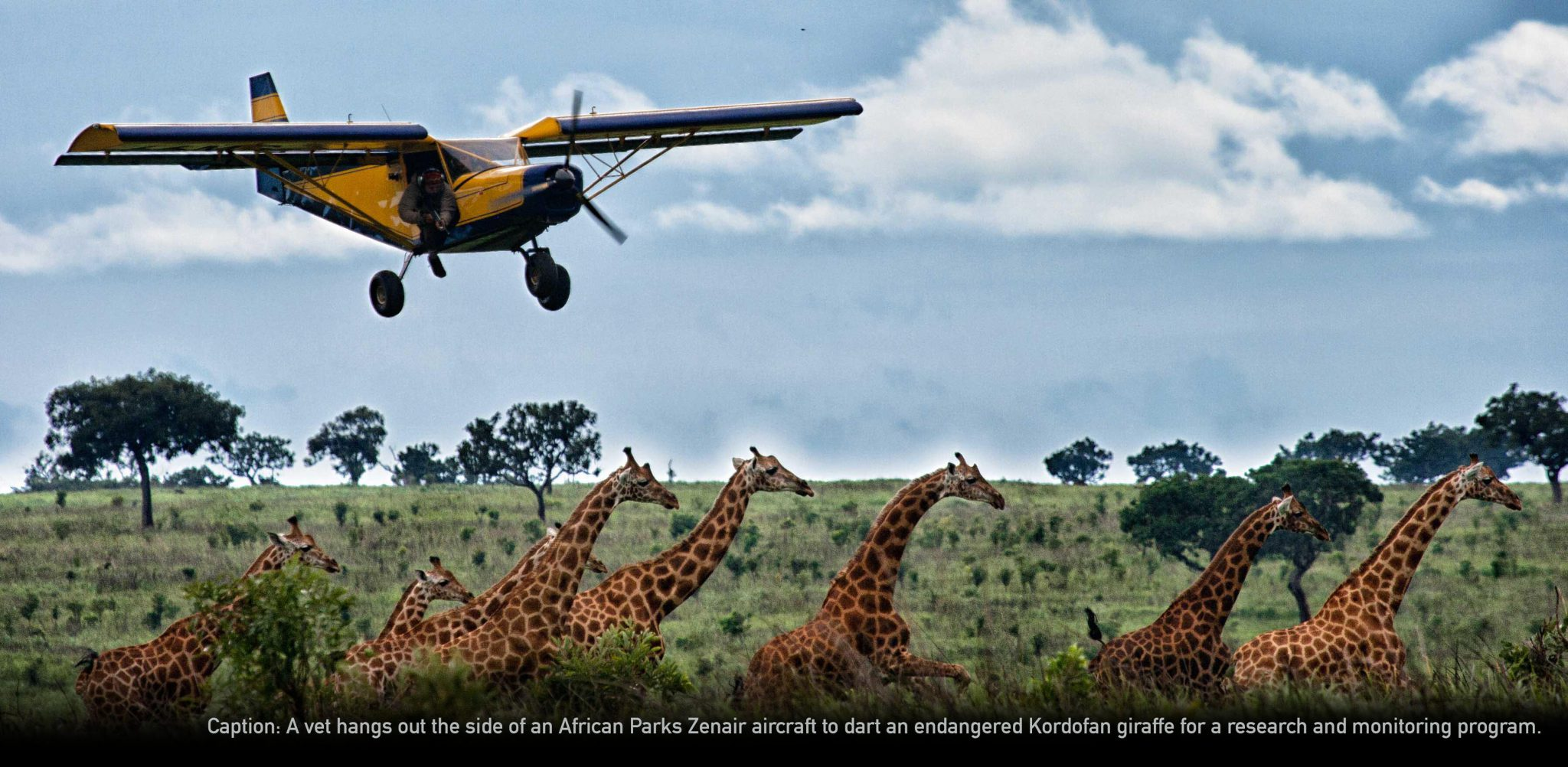 Spiders On Patrol Over Africa